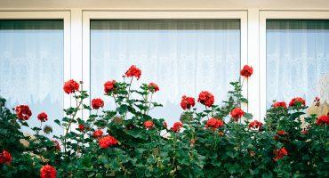 Upgrade your garden
