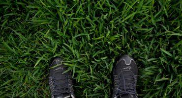 Lawn Design